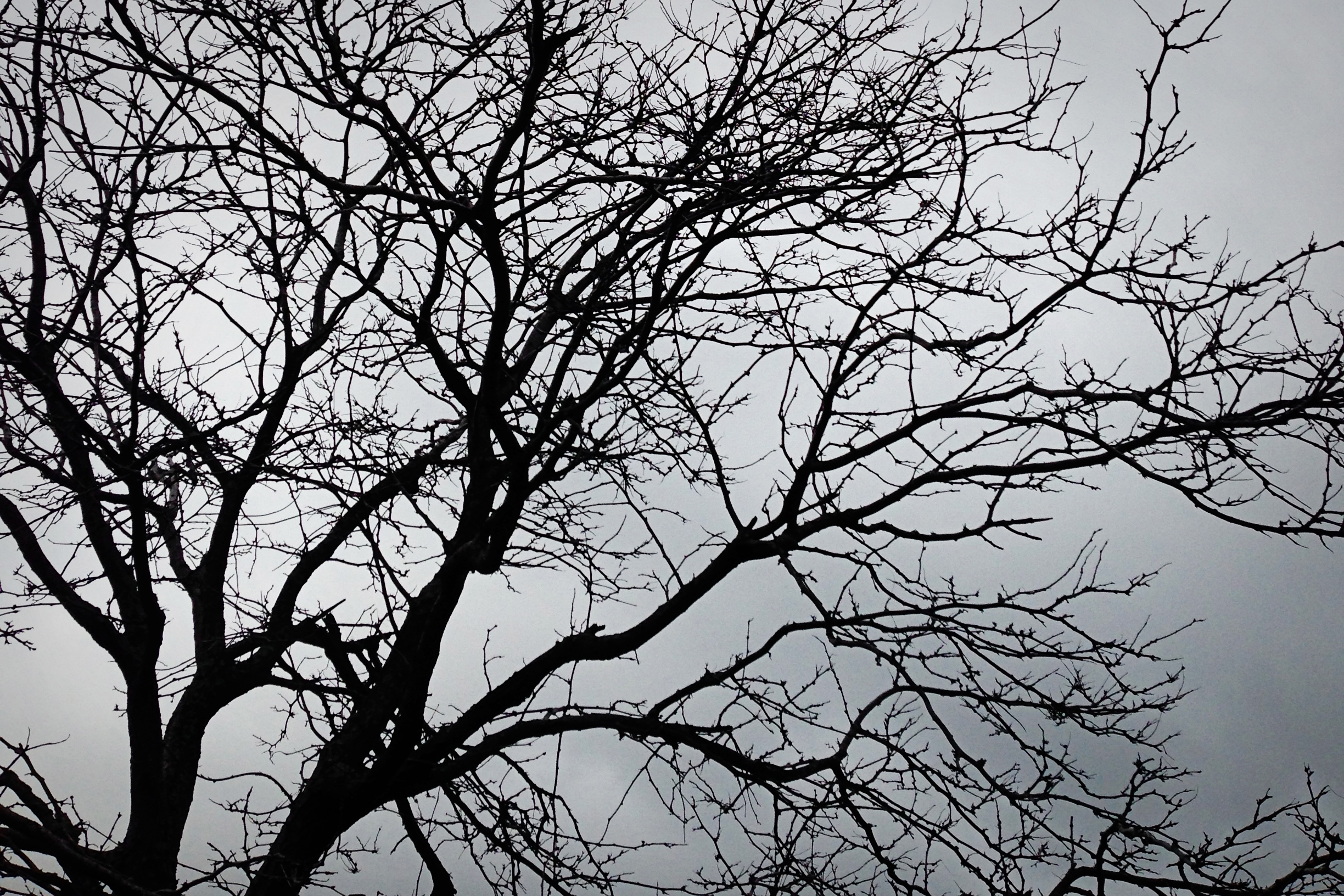 Cool Tree Black And White: Black And White Images Of Trees 16 Desktop Wallpaper