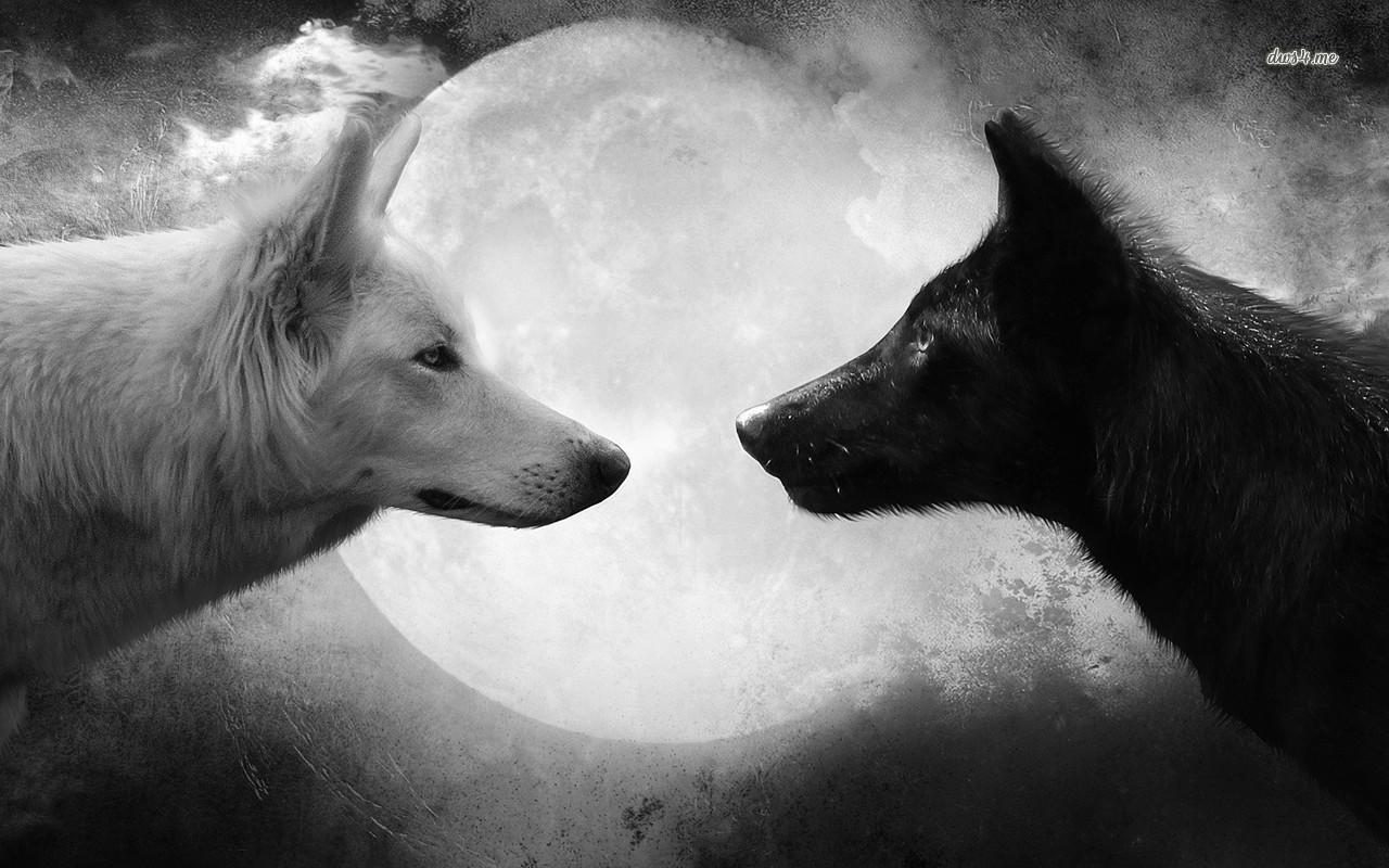 Black And White Wolf 22 Free Wallpaper - Hdblackwallpaper.com